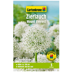 Blumenzwiebel »Gartenkrone Allium Mount Everest«