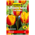 Blumenzwiebel »Gartenkrone Tulpe Flair Fringed«