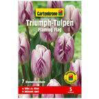 Blumenzwiebel »Gartenkrone Tulpe Flaming Flag«