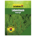 Lebensbaum, Thuja occidentalis »Smaragd«, winterhart