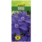 Waldrebe, Clematis »The President«, blau, winterhart