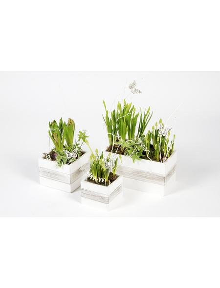 Bepflanztes Arrangement, Holzgefäß mit Frühlingsblühern