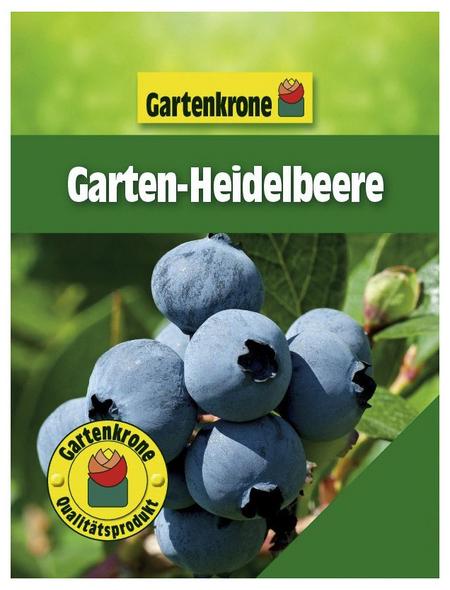 GARTENKRONE Garten-Heidelbeere Vaccinium corymbosum