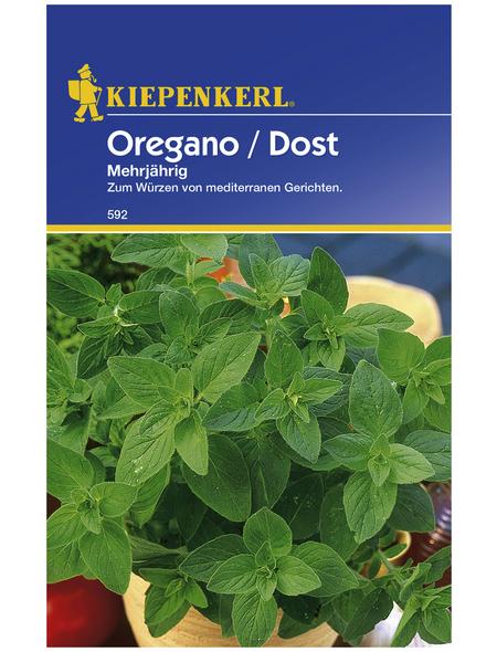 KIEPENKERL Oregano vulgare Origanum
