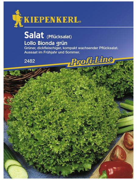 KIEPENKERL Pflücksalat sativa var.crispa Lactuca