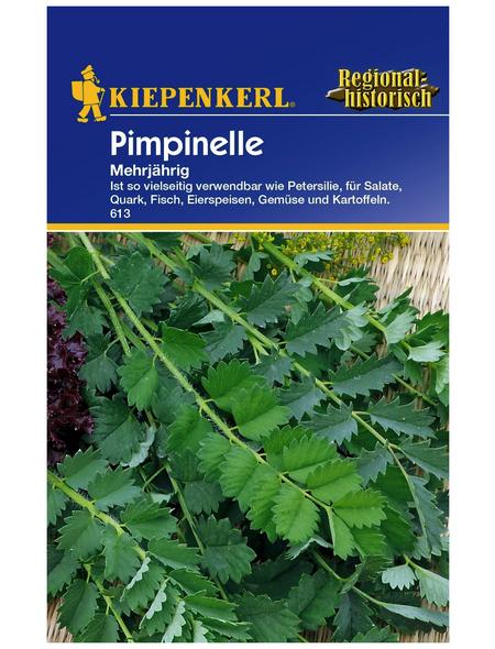 KIEPENKERL Pimpinelle Sanguisorba minor