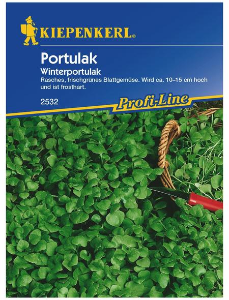 KIEPENKERL Portulak Montia perfoliata »Winterportulak«