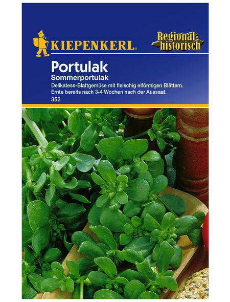 KIEPENKERL Portulak Portulaca oleracea ssp. sativa »Sommerportulak«