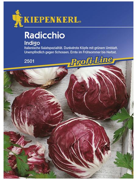 KIEPENKERL Radicchio intybus var.foliosum Chicorium
