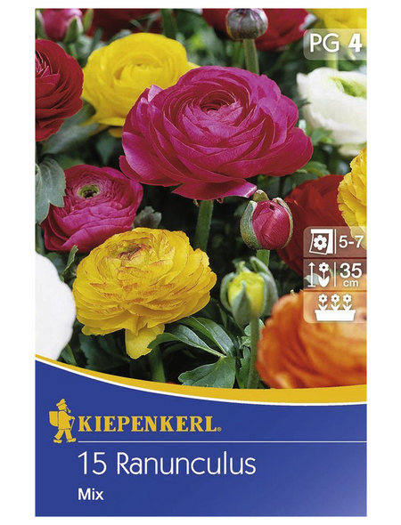 KIEPENKERL Ranunculus Aviv-Mix, 15 Stück