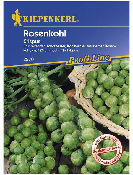 KIEPENKERL Rosenkohl oleracea Brassica