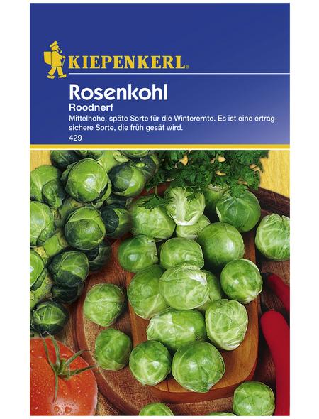 KIEPENKERL Rosenkohl oleracea var. gemmifera Brassica