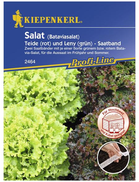 KIEPENKERL Salat sativa Lactuca