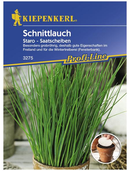 KIEPENKERL Schnittlauch schoenoprasum Allium »Staro«