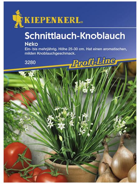 KIEPENKERL Schnittlauch tuberosum Allium »Neko«