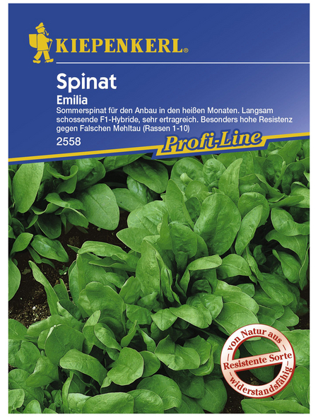 KIEPENKERL Spinat oleracea Spinacia »Emilia«