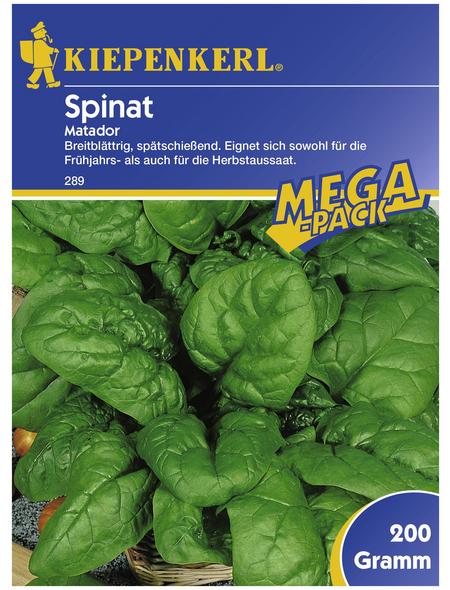 KIEPENKERL Spinat oleracea Spinacia »Matador«