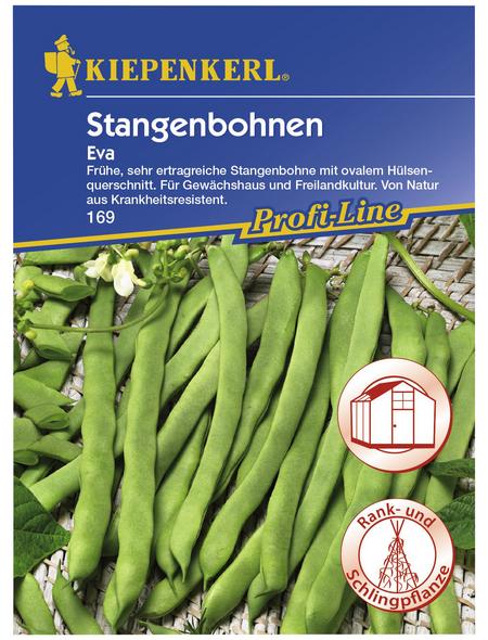 KIEPENKERL Stangenbohne vulgaris var. vulgaris Phaseolus »Eva«