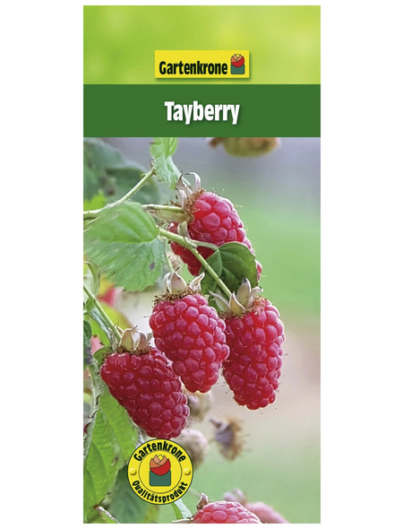 GARTENKRONE Tayberry, Rubus loganobaccus »Tayberry« Blüten: weiß, Früchte: rot, essbar