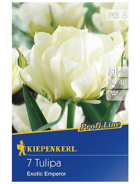 KIEPENKERL Tulpe Exotic Emperor, Weiß, 7 Blumenzwiebeln