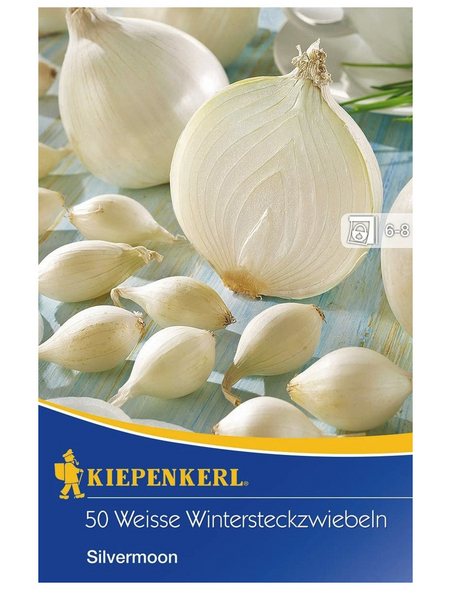 KIEPENKERL Wintersteckzwiebel Allium cepa »Silvermoon«