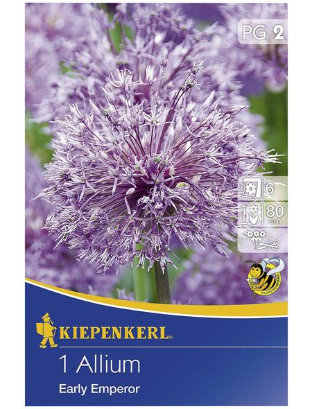 KIEPENKERL Zierlauch Allium Allium x Hybrida »Allium x Hybrida«