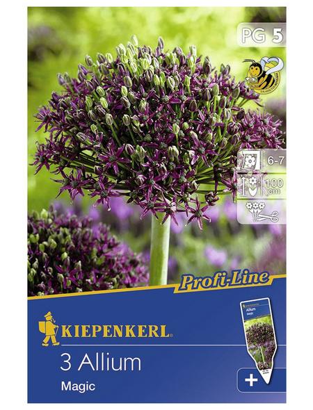 KIEPENKERL Zierlauch x Hybrida Allium