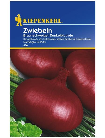 KIEPENKERL Zwiebel Allium cepa »De Brunswick«
