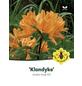 Azalee, Azalea knap hill »Klondyke«, goldgelb, Höhe: 40 - 50 cm-Thumbnail