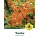 Azalee, Azalea luteum »Rumba«, orange, Höhe: 40 - 50 cm-Thumbnail