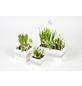 Bepflanztes Arrangement, Holzwürfel mit Frühlingsblühern-Thumbnail