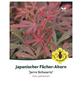 Fächerahorn, Acer palmatum »Jerre Schwartz«, Blattfarbe rot/braun-Thumbnail