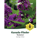 Flieder, Syringa prestoniae »Redwine«, Blütenfarbe rot-Thumbnail