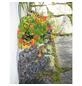 BELLISSA Hauswandbeet-Thumbnail