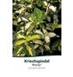 Kriechspindel, Euonymus fortunei »Blondy«, Blütenfarbe gelb-Thumbnail