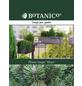 Kugel-Kiefer mugo Pinus »Mops«-Thumbnail