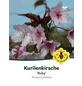 Kurilenkirsche, Prunus kurilensis »Ruby«, Blütenfarbe rosa-Thumbnail