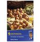 KIEPENKERL Schalotte cepa var. ascalonicum Allium-Thumbnail