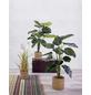 mica® decorations Seidenblume, Kunstpflanze, 1 x Monstera-Thumbnail