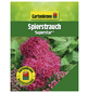 GARTENKRONE Spierstrauch, Spiraea japonica »Superstar «, rosa/pink, winterhart-Thumbnail