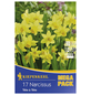 KIEPENKERL Steingarten-Narzisse cyclamineus Narcissus-Thumbnail
