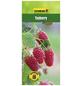GARTENKRONE Tayberry, Rubus loganobaccus »Tayberry« Blüten: weiß, Früchte: rot, essbar-Thumbnail