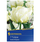 KIEPENKERL Tulpe Exotic Emperor, Weiß, 7 Blumenzwiebeln-Thumbnail