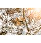 WINDHAGER Vogelfuttersilo Garden Massiv-Thumbnail