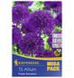 KIEPENKERL Zierlauch aflatunense Allium-Thumbnail