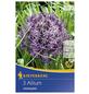 KIEPENKERL Zierlauch christophii Allium-Thumbnail