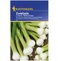 KIEPENKERL Zwiebel cepa Allium-Thumbnail