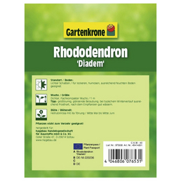GARTENKRONE Alpenrose, Rhododendron »Diadem«, rot, winterhart