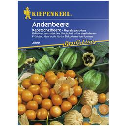 KIEPENKERL Andenbeere peruviana Physalis »Kapstachelbeere«