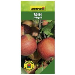 GARTENKRONE Apfel, Malus domestica »Jonagold«, Früchte: süß-säuerlich, zum Verzehr geeignet